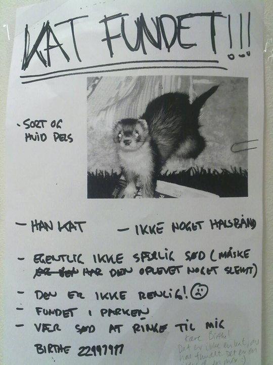 Kat fundet.jpg