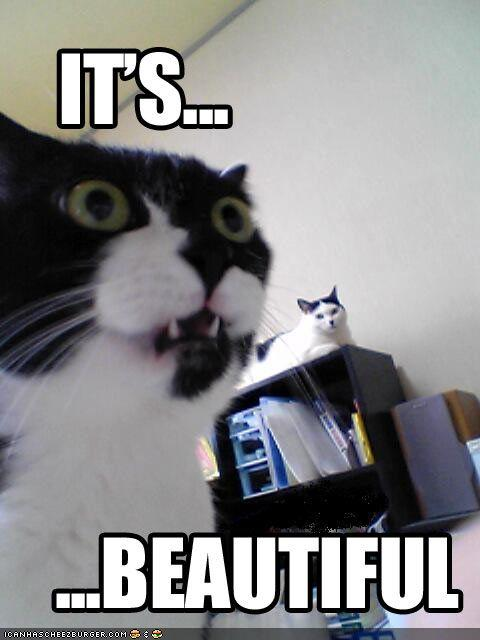 funny-pictures-cat-is-amazed.jpg