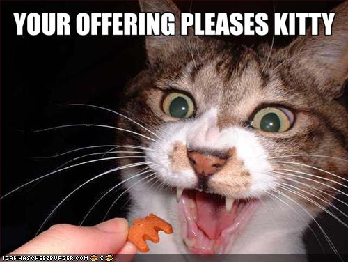funny-pictures-cat-likes-offering.jpeg