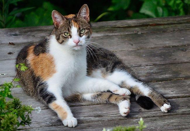 kat-udenfor.jpg